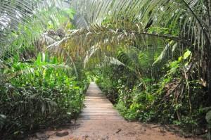 Amazon trail